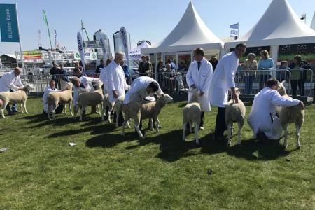 NSA Sheep Centre at Balmoral Show